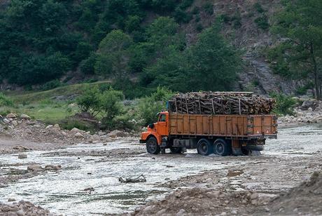 قاچاق چوب آفت جنگل های گلستان