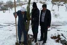 غرس 50 هزار اصله نهال در حاشیه جاده گردشگری سرعین