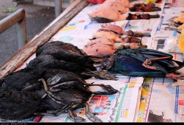شکارچیان متخلف در رشت دستگیر شدند