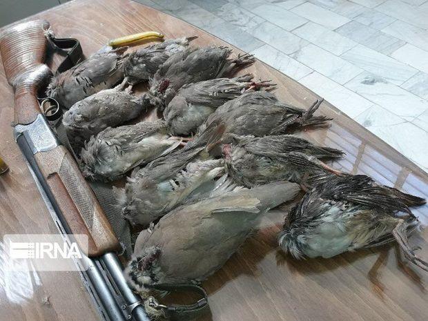 ۱۴قطعه کبک از متخلف شکار در زرند کرمان کشف شد