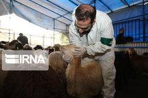 ذبح دام در روز عید قربان در کشتارگاههای کردستان انجام شود