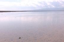 80 درصد تالاب کجی نهبندان آبگیری شد