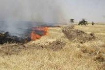 آتش زدن بقایای محصولات کشاورزی جرم محسوب می شود
