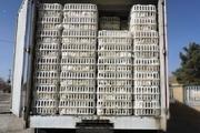 هزار و ۵۰۰ قطعه مرغ زنده قاچاق در تفت کشف شد