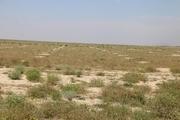 طرح توسعه ۸۵۰ هکتار از مراتع جنوبی ورامین اجرا شد