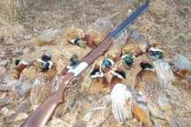 پرونده 649 شکارچی غیرمجاز روی میز قضات مازندران