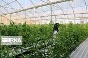 ۲۵۵ میلیارد ریال برای ایجاد گلخانه در خراسان شمالی پرداخت میشود