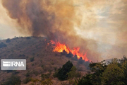 حیات وحش سمنان در آتشسوزی مراتع تلفاتی نداشت
