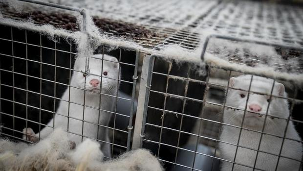 آغاز واکسیناسیون حیوانات در برابر کرونا در فنلاند