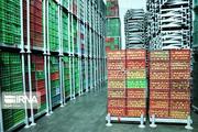 عوارض صادرات سیب درختی لغو شد