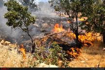 آتشسوزی ۹۰ درصد از جنگلها عامل انسانی دارد