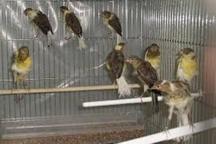 متخلفان زیست محیطی در لرستان دستگیر شدند