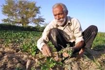 120هزار خانوار روستایی در لرستان فاقد بیمه هستند