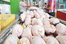 روزانه حدود ۳۰ تن مرغ با قیمت مصوب در قم توزیع میشود