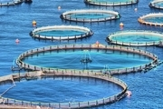 افزایش بهرهوری با پرورش ماهی در قفس