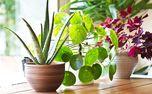 اگر به نگهداری گیاهان در خانه علاقه ندارید، این مطلب را بخوانید