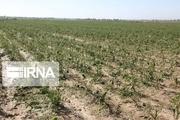 خسارت ۳۵۰ میلیارد ریالی بارندگی به کشاورزی جاجرم