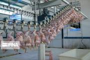 ذخیرهسازی ۱۷۴ تن مرغ در لرستان