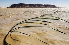 نفسهای تازه تالاب بینالمللی هامون پس از سالیان طولانی خشکسالی