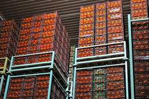 200 تن میوه بیشتر از پارسال در گیلان ذخیره شده است