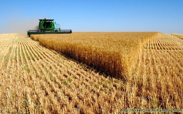 مخاطرات طبیعی به کاهش تولید گندم دامن زد