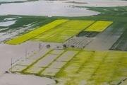روند پرداخت وام خسارتدیدگان کشاورزی گلستان کند است
