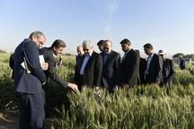دولت از ایده های جدید در بخش کشاورزی حمایت می کند