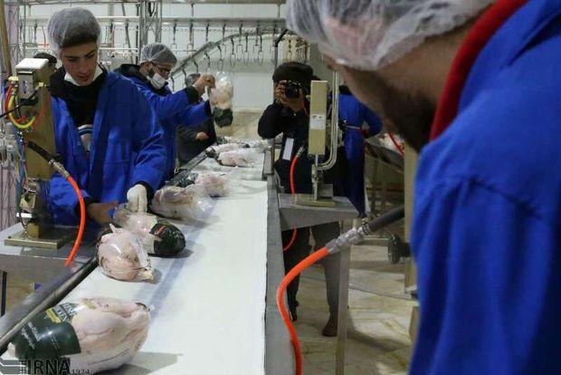 طرح ارتقای کیفیت بهداشتی گوشت مرغدر آذربایجانغربی آغاز شد