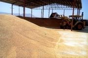 ممنوعیت خرید گندم توسط مراکز غیردولتی و خصوصی در زنجان