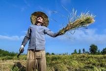 فعال شدن بیمه پایه کشاورزی از مطالبات جدی است