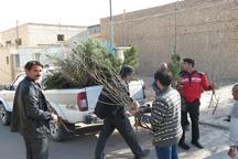 توزیع 200 هزار اصله نهال در یزد آغاز شد