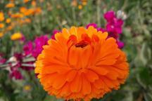 نخستین جشنواره گل و گیاه در شهرستان حمیدیه گشایش یافت