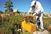 فعالیت بیش از پنج هزار نفر در صنعت عسل اردبیل