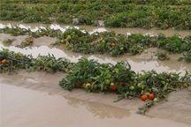 ۳۰۰ کشاورز سیلزده سیمرغی تسهیلات دریافت کردند