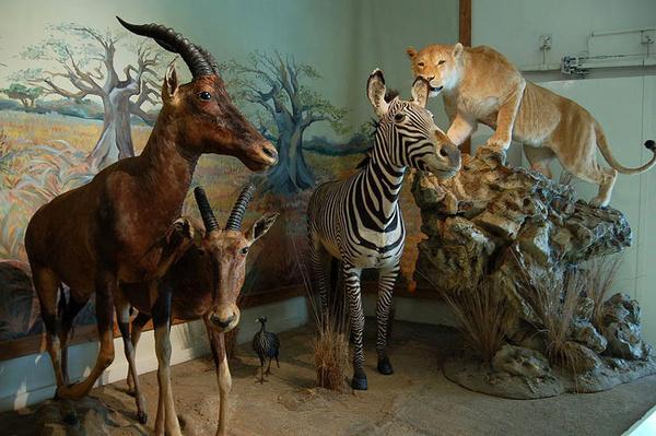 بازدید رایگان از موزه تنوع زیست محیطی استان قزوین