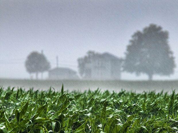 بارشهای خوب اخیر نویدبخش رونق تولید و اشتغال در سرخس است