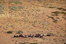 ۲۳۰ میلیارد ریال از صندوق توسعه ملی به منابع طبیعی زنجان تخصیص یافت