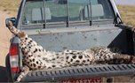 35 مورد گزارش حیوان آزاری به مرکز فوریت های سایبری محیط زیست