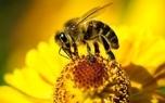 افزایش گرایش زنان گیلانی به زنبورداری