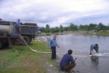یک میلیون بچه ماهی در رودخانه چلوند آستارا رهاسازی شد