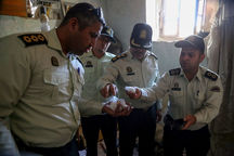 پلیس ۴۳ کیلوگرم مواد مخدر در تربت حیدریه کشف کرد