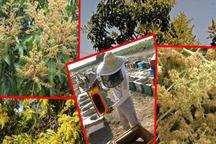 آغاز بهار در جنوب سیستان و بلوچستان