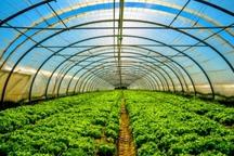 کشت گلخانه ای در تایباد 20 درصد افزایش یافت