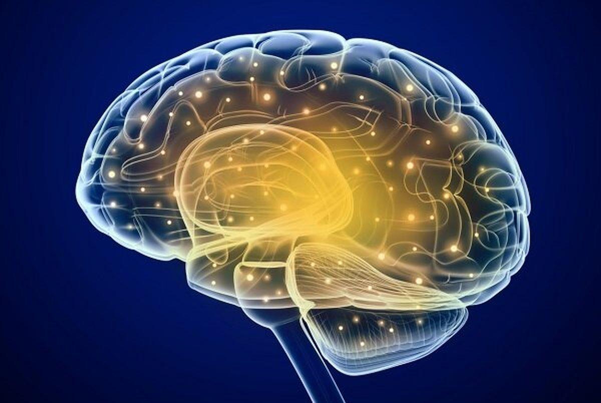 این عوامل باعث کوچک شدن مغز می شود
