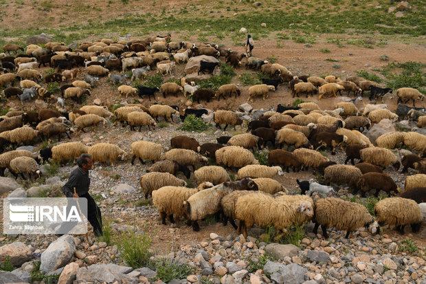۲۰ دوره آموزشی در زمینه توانمندسازی عشایر خراسان شمالی برگزار میشود