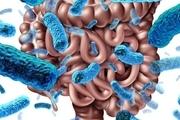 یک عامل مهم در پیشگیری از بیماریها