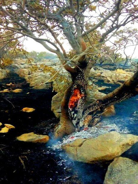 جنگل دژکرد اقلید در آتش میسوزد