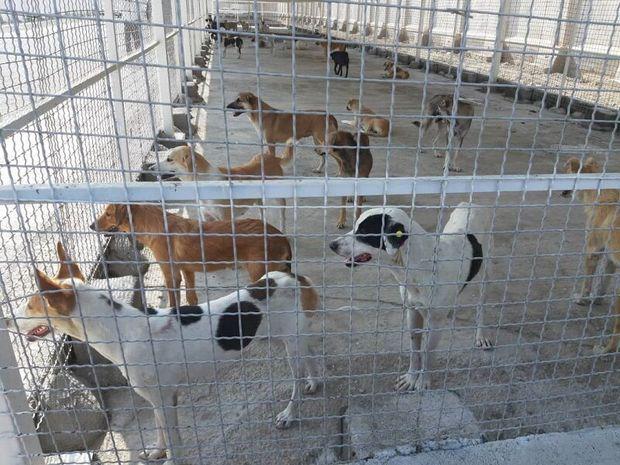 زندهگیری سگهای بدون صاحب در تبریز