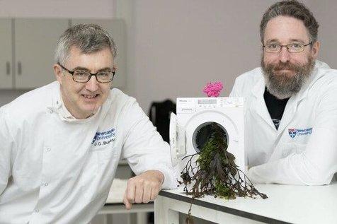تولید پودرهای شوینده از جلبک دریایی با قابلیت حفاظت از محیط زیست