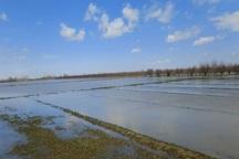 سیل به 4070 هکتار اراضی کشاورزی میاندوآب خسارت زد